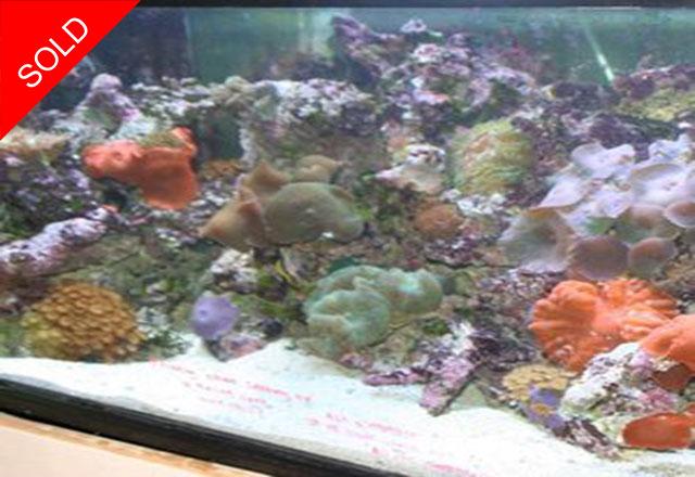 Aquarium Business l SOLD